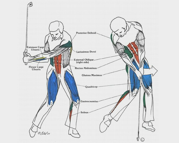 Muscles Are Used In The Golf Swing